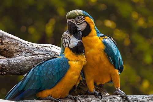 თუთიყუში, ფრინველი