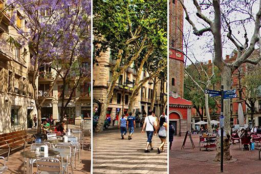 barcelona_gracia_4550505677111023375