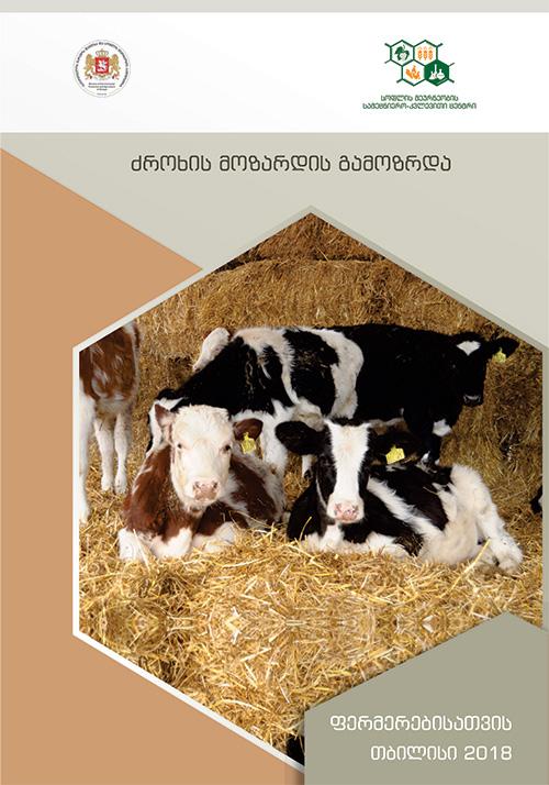 ხბო, გამოზრდა, ძროხა