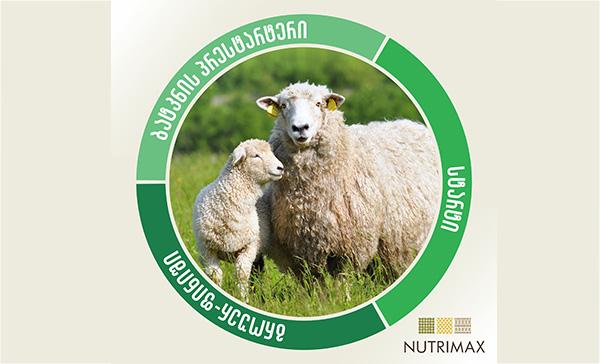 ცხვარი, საკვები
