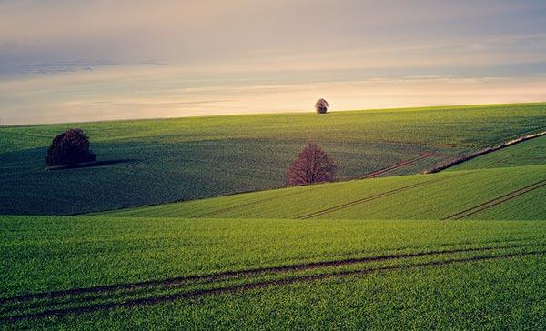 მიწა, სასოფლო, სამეურნეო