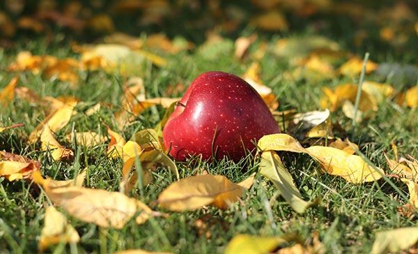 ვაშლი, ხარისხი, ბაღი, ექსპორტი