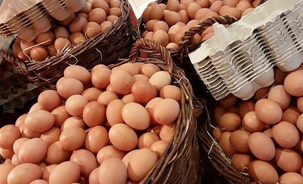 კვერცხი