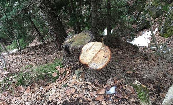 ხე-ტყე