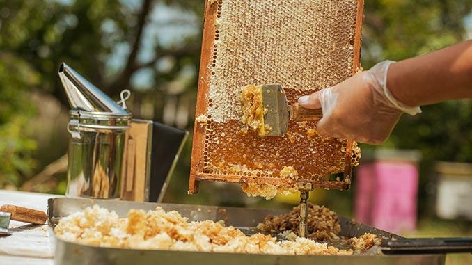 ანათალი, ფუტკრის, პროდუქტები