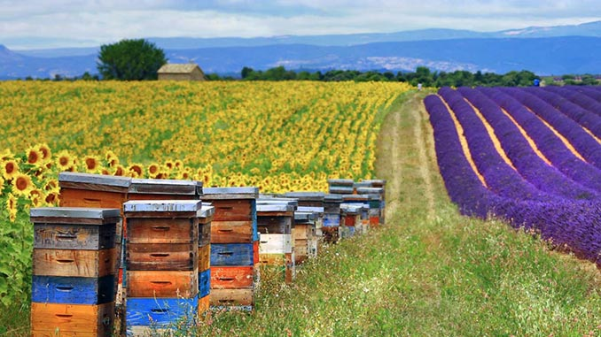 ფუტკარი, მოვლა, მეფუტკრეობა