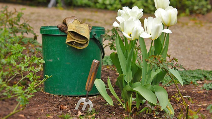 ყვავილნარი, ყვავილნარის, გაშენება, ბაღი