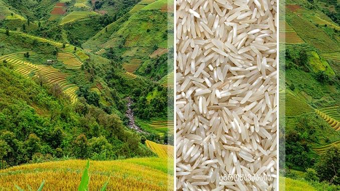ბრინჯი, აგრო, ტექნოლოგია