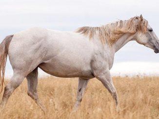 ცხენი, კვება, რეცეპტები