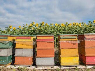 ფუტკარი, აგროკალენდარი