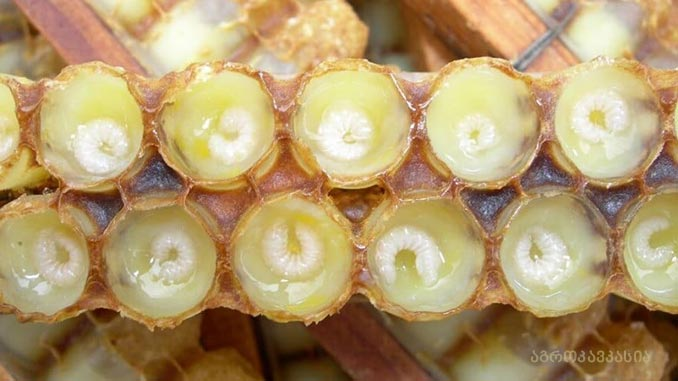 ფუტკრის, რძე, სამკურნალო