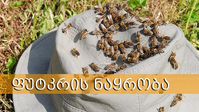 ფუტკრის, ნაყრობა