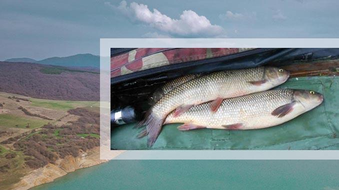 ხრამული, ცოცხალი, თევზი