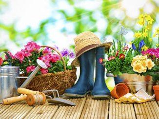 ყვავილები, მოვლა, მებაღეობა, ყვავილები, მეყვავილეობა