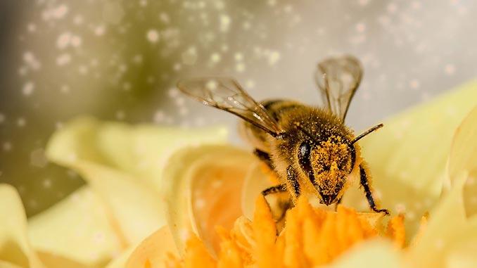 ნოზემატოზი, ფუტკარი, მეფუტკრეობა