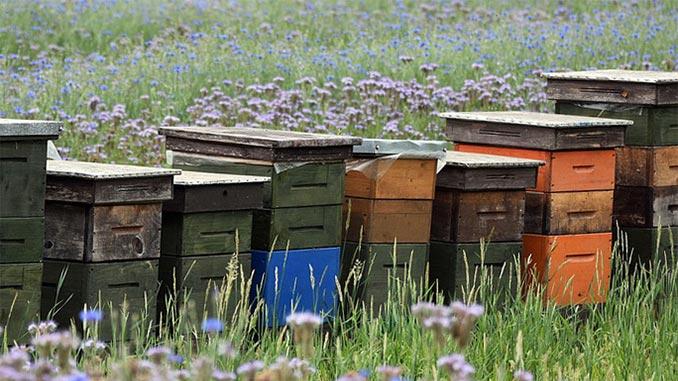 ფუტკრები, ფუტკრის, ოჯახი