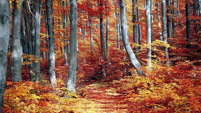 ტყე, მეტყევეობა, სატყეო, საფრანგეთი