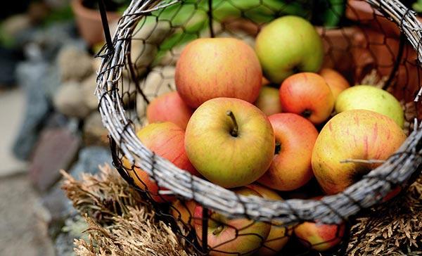 ვაშლი, ჩაბარება, ფასი