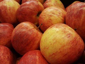 ვაშლი, ჯიშები, კომერციული, ბაღი