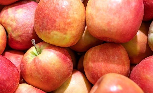 ვაშლი, საპროგნოზო, მოსავალი