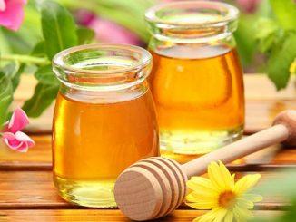 თაფლი, ექსპორტი, მეფუტკრეობა