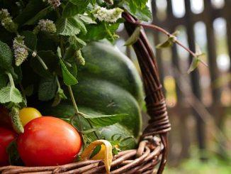 მცენარეთა, დაცვა, ბიომეურნე, ორგანული
