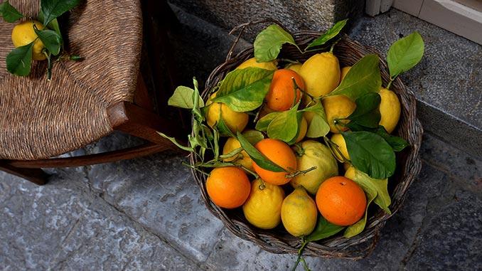 ლიმონი, სამკურნალო, მცენარე