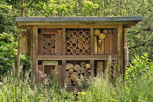 როგორ, დავეხმაროთ, ფუტკარს