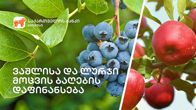 ვაშლი, ლურჯი, მოცვი
