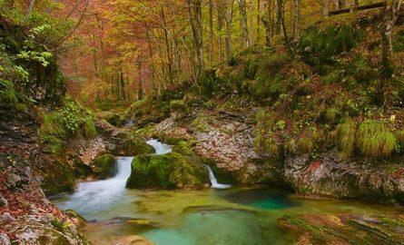 ტყის გამოყენების ტრადიციული კულტურა საქართველოში